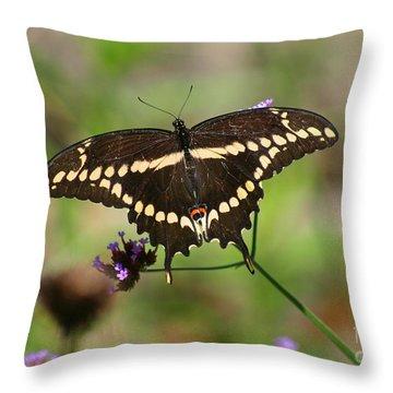 Giant Swallowtail Butterfly Throw Pillow by Karen Adams