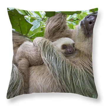 Hoffmanns Two-toed Sloth And Old Baby Throw Pillow