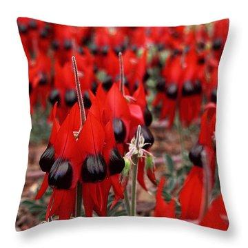 Sturt's Desert Pea Outback South Australia Throw Pillow by Carole-Anne Fooks