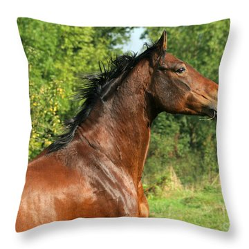 The Bay Horse Throw Pillow by Angel  Tarantella
