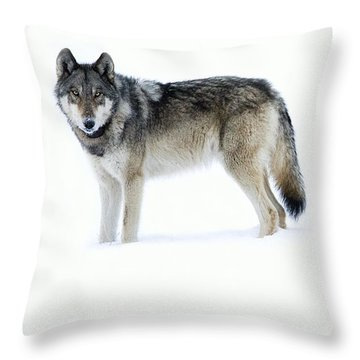 820f Of The Lamar Canyon Pack Throw Pillow