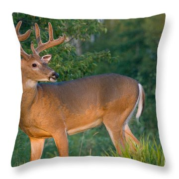 White-tailed Buck Throw Pillow by Linda Freshwaters Arndt