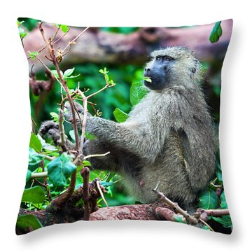 A Baboon In African Bush Throw Pillow by Michal Bednarek
