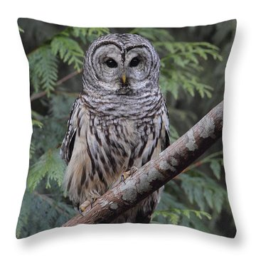 A Barred Owl Throw Pillow