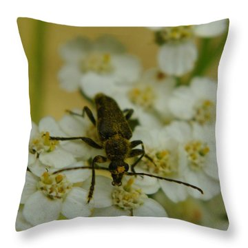 A Beattle Throw Pillow by Jeff Swan