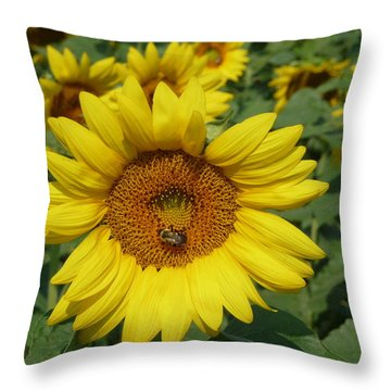 A Beesy Day Throw Pillow