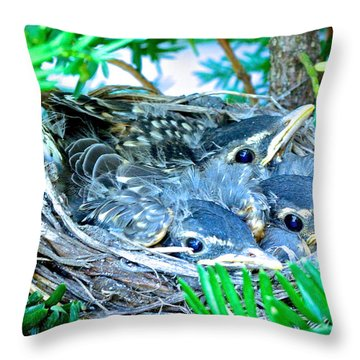 A Bird's Eye View Throw Pillow by Rita Mueller