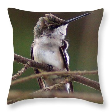 A Bit Of An Itch Throw Pillow by Kim Pate