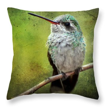 A Broad-billed Hummer Throw Pillow by Barbara Manis