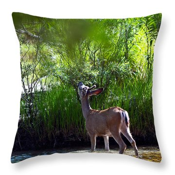 A Buck Feeding Throw Pillow by Brian Williamson