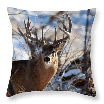 A Buck In The Bush Throw Pillow