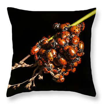 A Bunch Of Ladybugs Throw Pillow