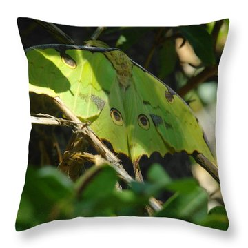 A Buttterfly Resting Throw Pillow by Jeff Swan