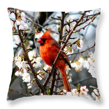 A Cardinal In The Apple Blossoms Throw Pillow