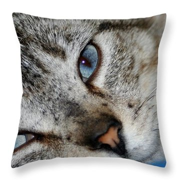 A Cat Named...blue Throw Pillow