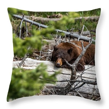 Throw Pillow featuring the photograph A Cinnamon Bear Nap by Yeates Photography
