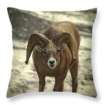 A Close Encounter Throw Pillow