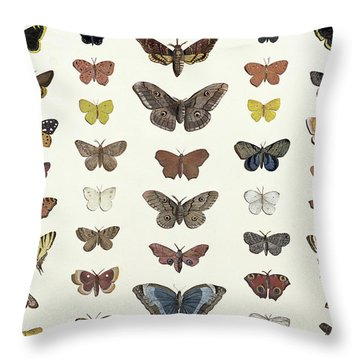 A Collage Of Butterflies And Moths Throw Pillow by French School