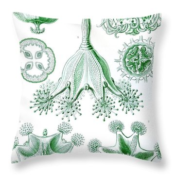 A Collection Of Stauromedusae Throw Pillow