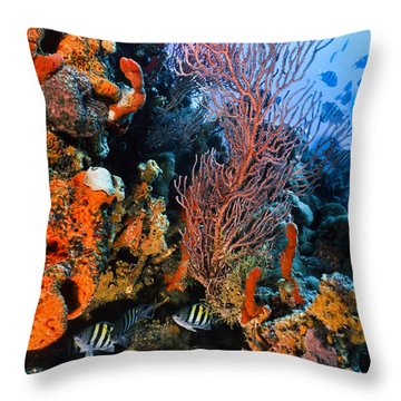 A Colorful Ledge Throw Pillow