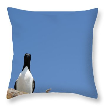 A Curious Bird Throw Pillow by Anne Gilbert