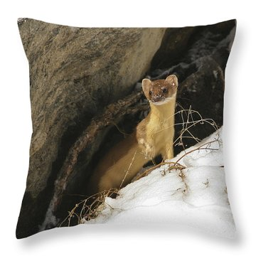 A Curious Glance Throw Pillow