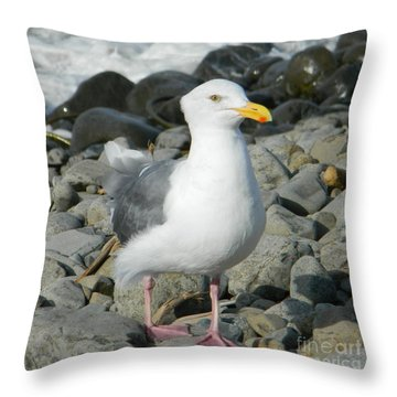 Throw Pillow featuring the photograph A Curious Seagull by Chalet Roome-Rigdon