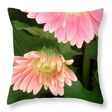 A Curtsy Throw Pillow