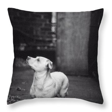 A Dog On The Roof In New York City Throw Pillow