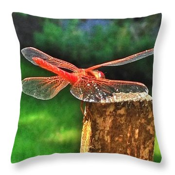 A Dragonfly Came By For A Visit Today! Throw Pillow
