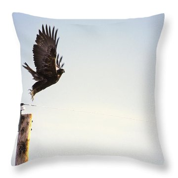 A Falcon Takes To The Air Throw Pillow