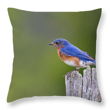 Throw Pillow featuring the photograph A Favorite Perch by Gary Hall