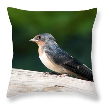 A Female Purple Martin Is Watching You Throw Pillow by Eva Kaufman