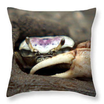 A Fiddler Crab Around Hilton Head Island Throw Pillow by Kim Pate