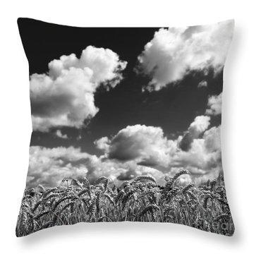 A Field Of Wheat . Limagne. Auvergne. France Throw Pillow by Bernard Jaubert