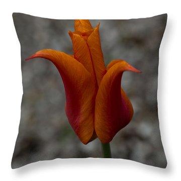 A Flamboyant Flame Tulip In A Pebble Garden Throw Pillow by Georgia Mizuleva