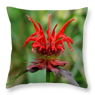 A Flowering Red Castle Beauty Throw Pillow