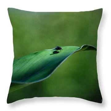 Throw Pillow featuring the photograph A Fly And His Shadow by Thomas Woolworth
