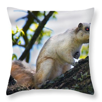 A Fox Squirrel Pauses Throw Pillow by Betsy Knapp