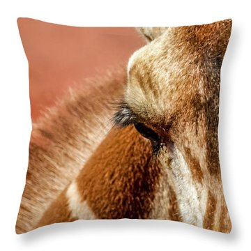 A Giraffe Throw Pillow by Ernie Echols