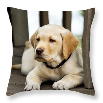 A Golden Lab Named Monty Throw Pillow by Adam Van Spronsen
