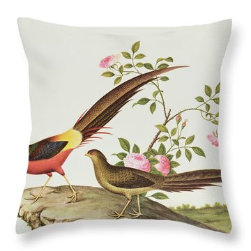 A Golden Pheasant Throw Pillow by Chinese School