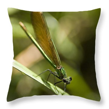 Throw Pillow featuring the photograph A Green Dragonfly by Stwayne Keubrick