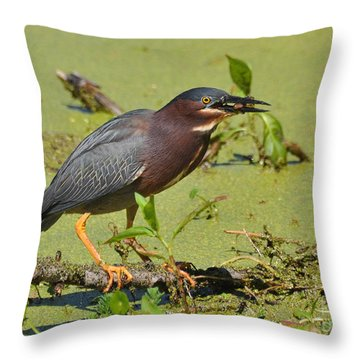 Throw Pillow featuring the photograph A Greenbacked Heron's Breakfast by Kathy Baccari