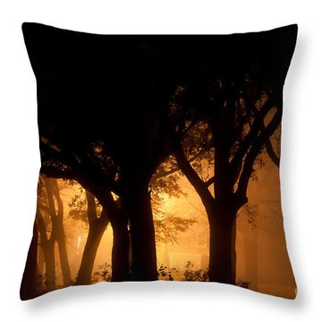 A Grove Of Trees Surrounded By Fog And Golden Light Throw Pillow