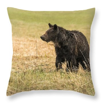 Throw Pillow featuring the photograph A Hobo Cub by Yeates Photography