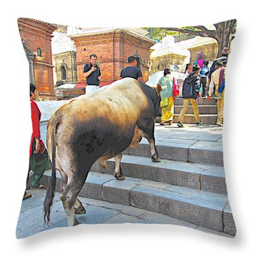 A Holy Cow Climbing Steps From Bagmati River In Kathmandu-nepal  Throw Pillow