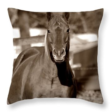 Throw Pillow featuring the photograph A Horse Is A Horse by Deena Stoddard
