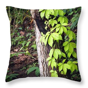Throw Pillow featuring the photograph A Journey To The Canopy by Deborah Fay