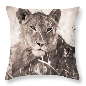 A Lioness Lays In The Shade Kenya Throw Pillow by David DuChemin